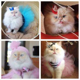 What's Right Meow: Αυτό είναι το νέο fashion icon στο διαδίκτυο
