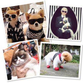 It's a pet's world: Βρήκαμε τα 10 πιο στιλάτα κατοικίδια που συναγωνίζονται κορυφαία fashion icons