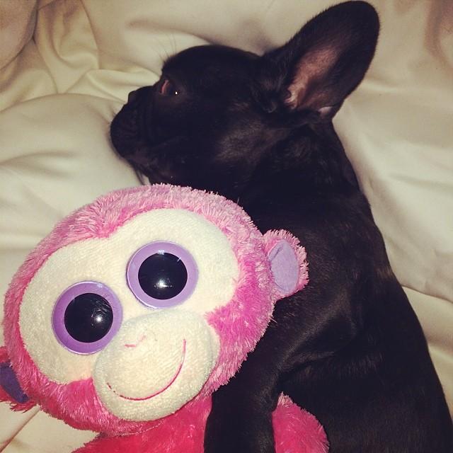 monkey-nap
