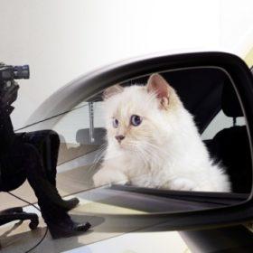 Choupette: Οδηγεί η γάτα του Κarl Lagerfeld;
