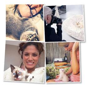 National Cat Day: Επτά celebrities που λατρεύουν τις γάτες τους και το αποδεικνύουν
