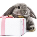 rabbit, homepage image, easter, present