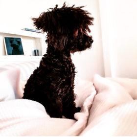So cute! Αυτά είναι τα πιο καλοχτενισμένα σκυλάκια στο instagram