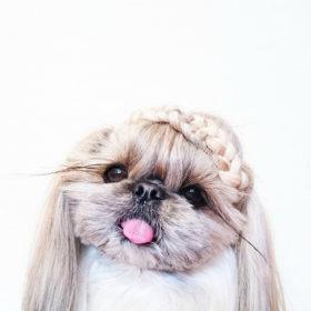 Κι όμως, αυτό το σκυλάκι έχει πιο ωραία μαλλιά από όλους μας