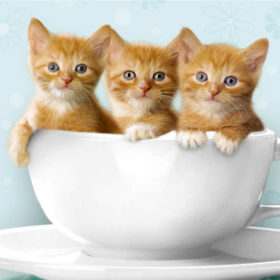 Crazy cat ladies αυτό είναι το τέλειο άρωμα για εσάς