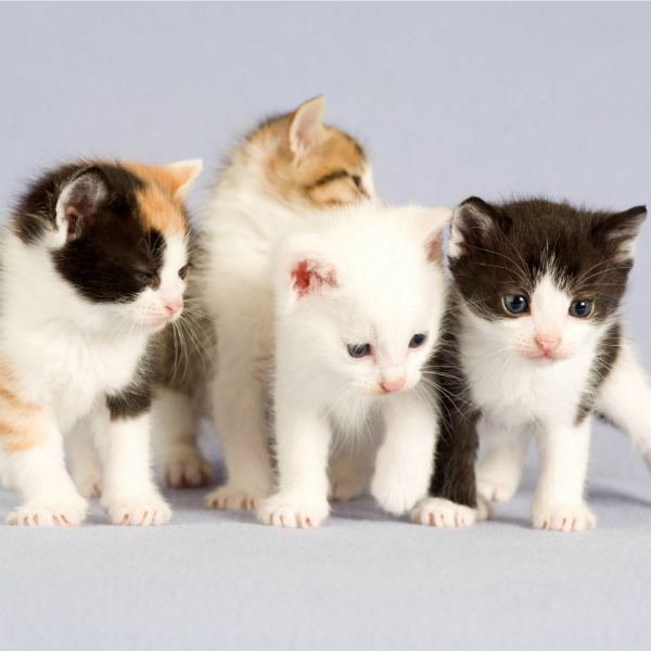 kittens, homepage image, gates, cats