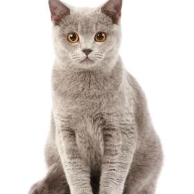 Γιατί οι γάτες μας παίζουν & πως μπορούμε να τις κάνουμε ακόμη πιο χαρούμενες;