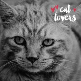 #Catlovers του κόσμου ενωθείτε: Μια έκθεση αποκλειστικά για τη γάτα