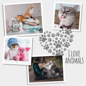 Παγκόσμια Ημέρα Ζώων: Αυτά είναι τα δέκα πιο διάσημα κατοικίδια του instagram