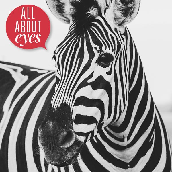 zebra eyes makeup homepage 600 X 600 hot trends στο μακιγιάζ ματιών