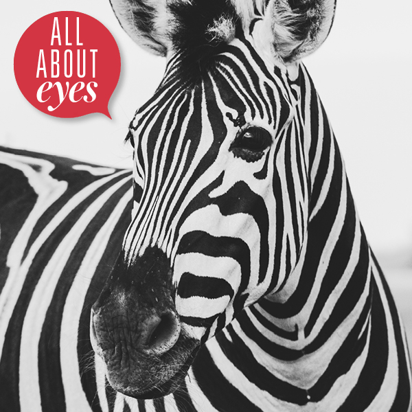zebra eyes makeup homepage 600 X 600